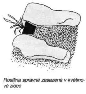 kvetinova-zidka3
