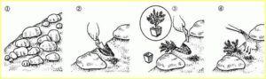 kvetinova zidka4