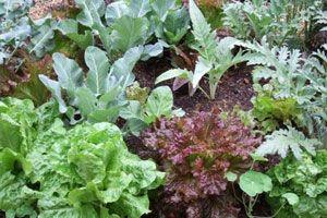 rostliny různých druhů