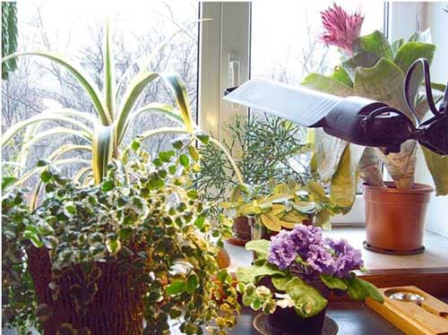 pokojové rostliny v zimním období