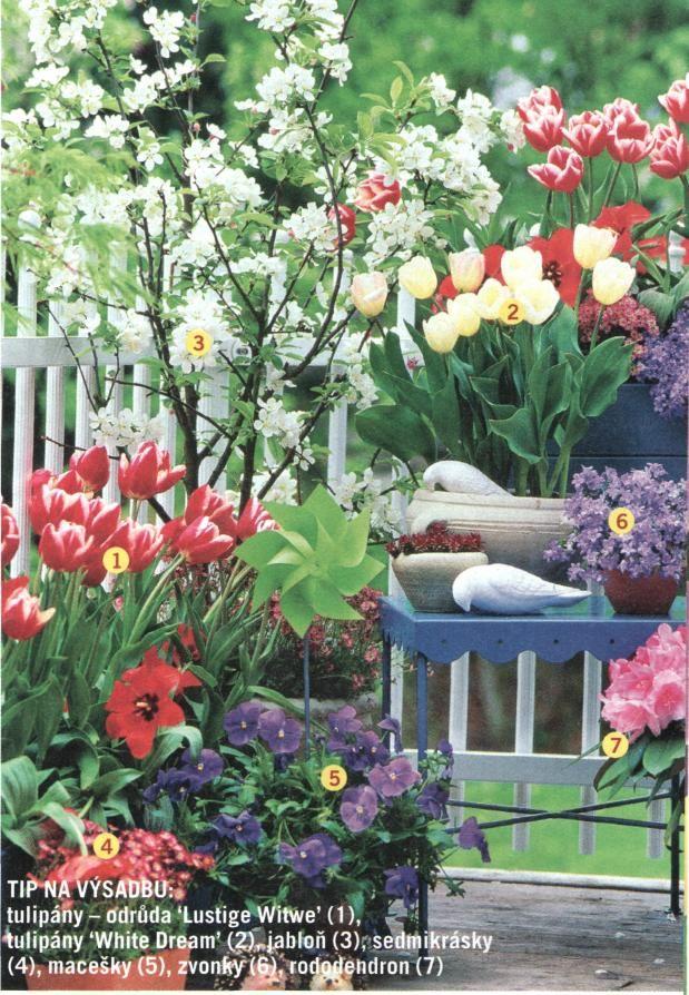 tulipány - Lustige Witwe, White Dream, jablon, sedmikrasky, macešky