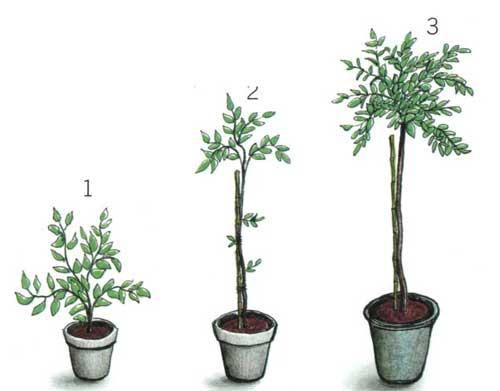 Jak vypěstovat stromek