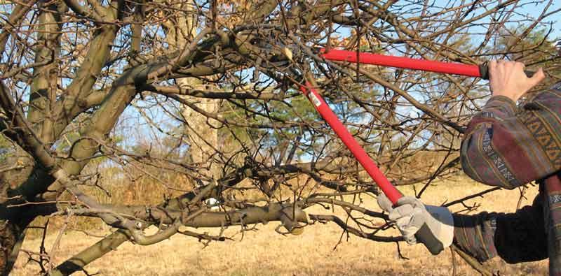 jak odřezávat větve