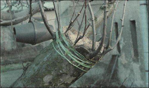 Štěpařské vosky
