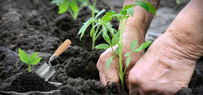 výsev a výsadba zeleniny a květin