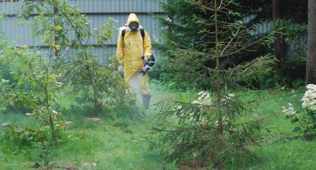 Insekticidy na zahrádce