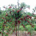 Podpěry pro stromý