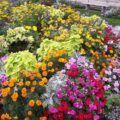 Letničky zahrada