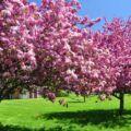 Okrasné stromy a keře na zahrádku obrázky