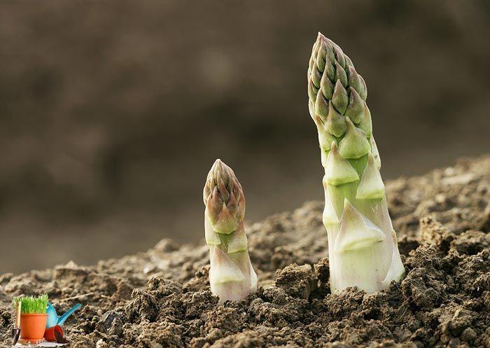 Сhřest pěstování na zahrádce