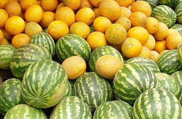 odrudy-melouny