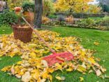 listopad kalendar zahrada