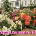 Růžová zahrada 2016