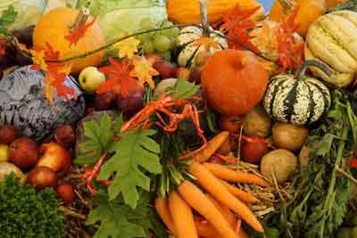 Sklízíme poslední zeleniny