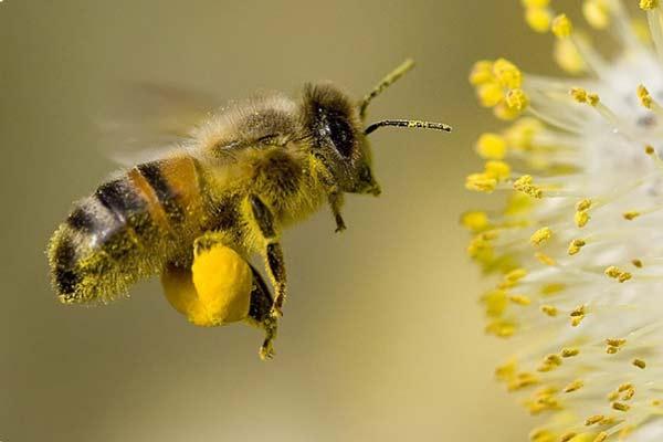 Včely a chemie