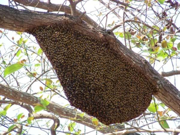pomůže včelař