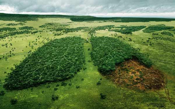 Biologická ochrana ovocných dřevin