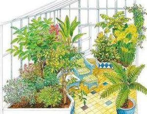citrusů ve sklenících