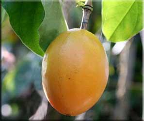 Plod mučenky (Passífiora alata)
