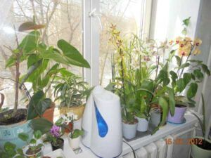 Suchomilné rostliny