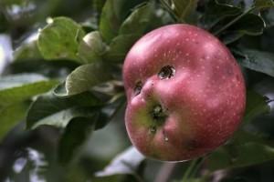 vtipne jabko tvar