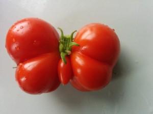 Vtipné ovoce rajce
